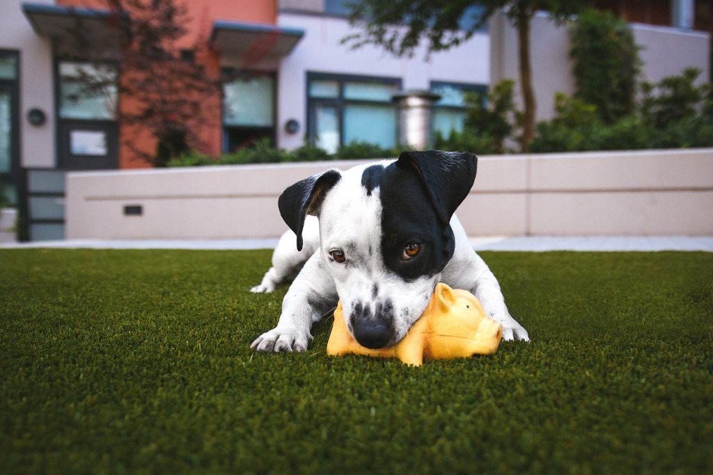 Artificial Grass for Dogs, Brisbane, Redlands, Logan