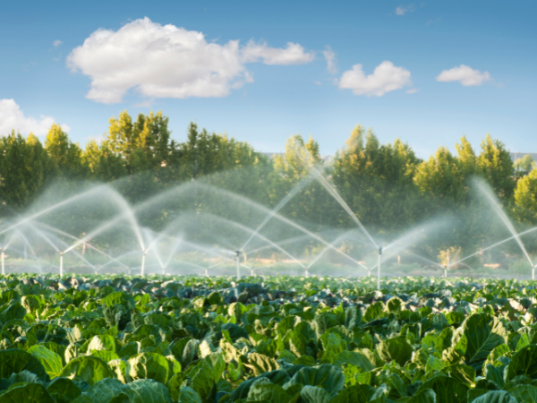 commercial-irrigation
